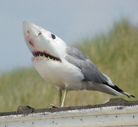 Pictures Birds on Without Words  A Bird With A Shark Head  Really Amazing    Photo