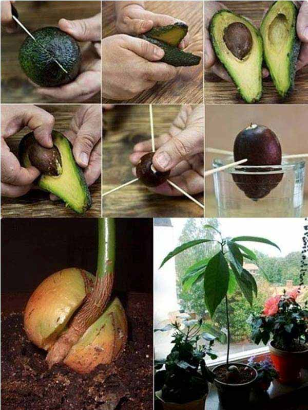 Easy Indoor Gardening Ideas Part - 32: Mini-Indoor-Gardening-11