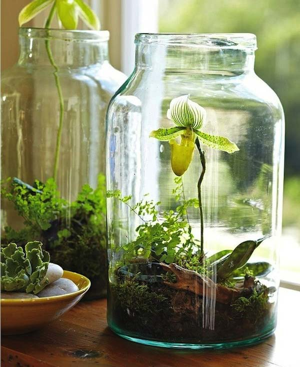 26 mini indoor garden ideas to green your home amazing for Jardin indoor