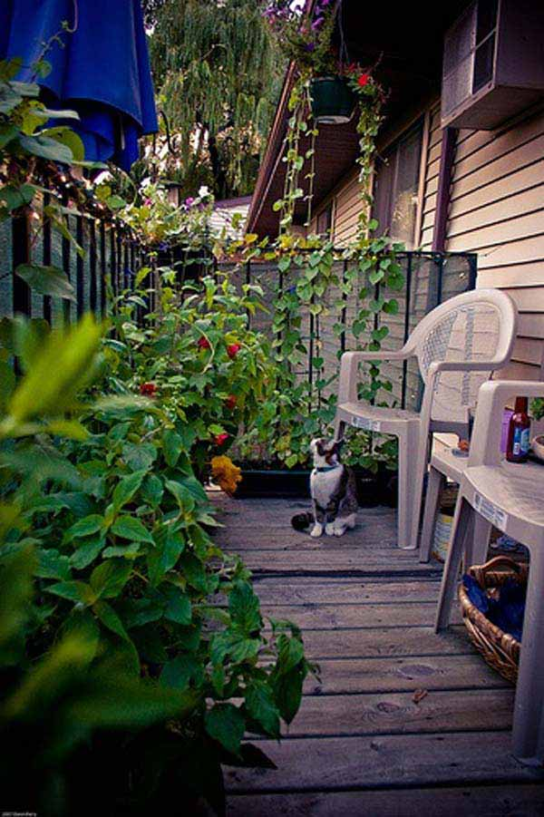 30 inspiring small balcony garden ideas amazing diy for Balcony vegetable garden ideas
