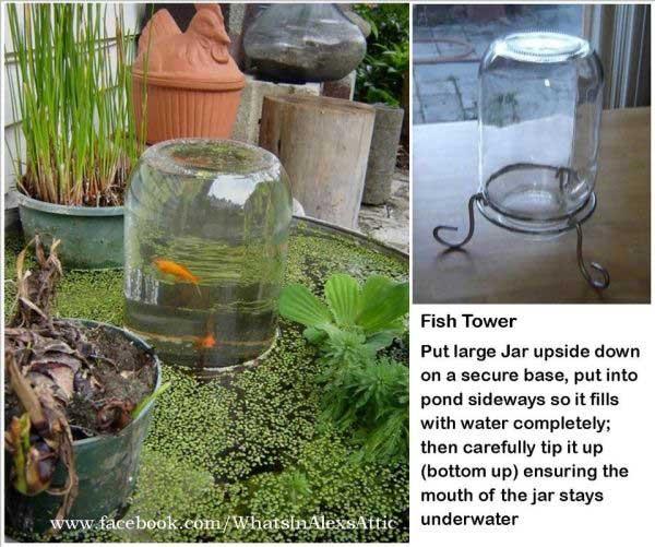 backyard-pond-water-garden-16