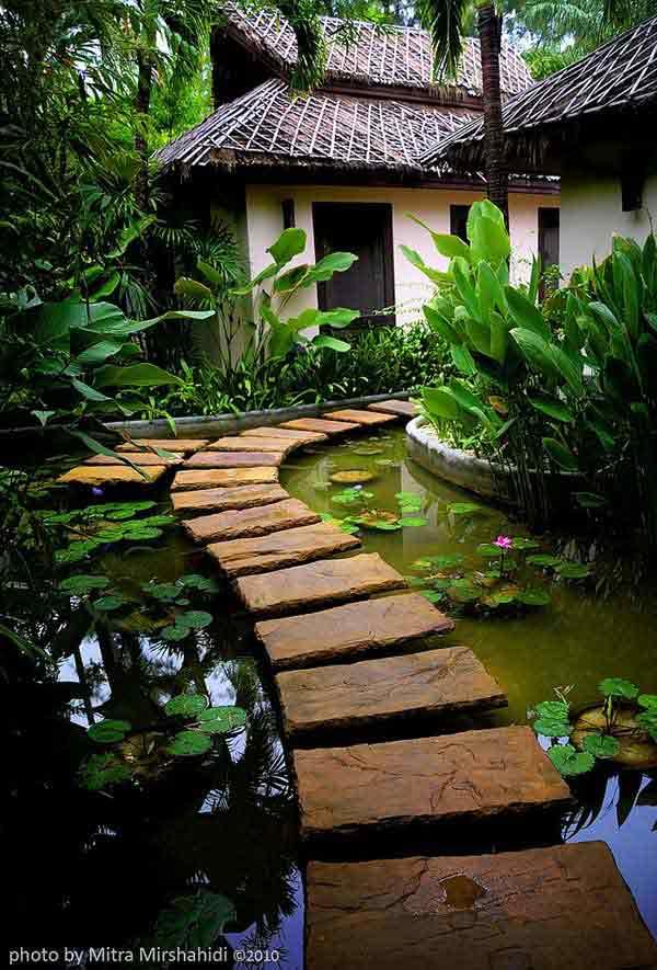 backyard-pond-water-garden-7