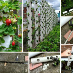 Vertical Strawberry Tube Planter for Your Small Garden