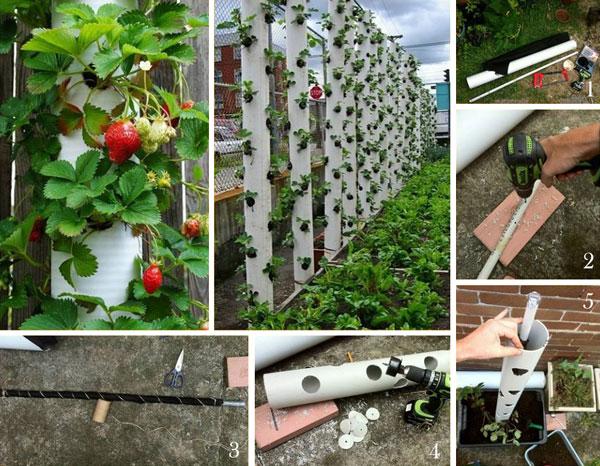 vertical-strawberry-tube-planter