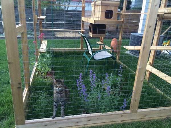 Awesome Outdoor Cats Walkway And House Amazing Diy