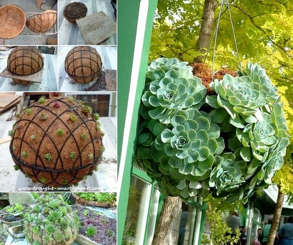 21 Budget Friendly Cool Diy Home Bar You Need In Your Home: DIY Hanging Succulent Sphere Anyone Can Make