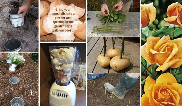 Amazing Top 24 Incredibly Clever Gardening Tricks For Your Garden Nice Ideas