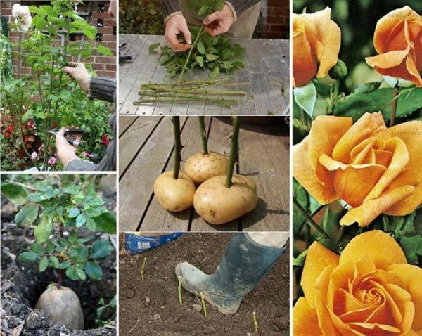 gardening-tips-woohome-3