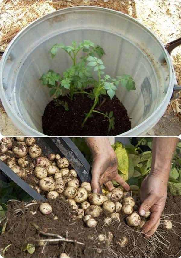 gardening-tips-woohome-5