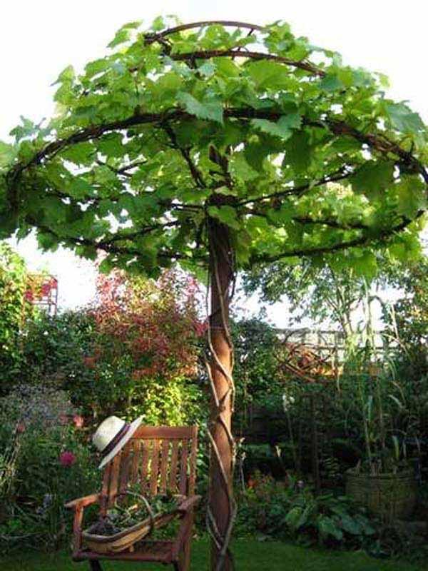 backyard-landscaping-woohome-1