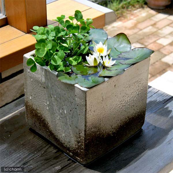 mini-pond-in-a-pot-woohome-15