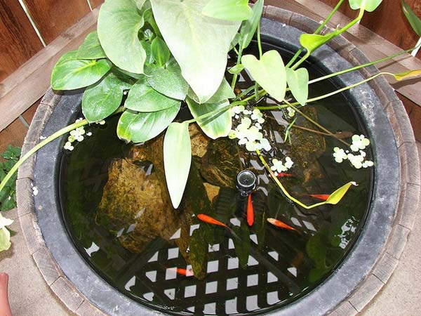 outdoor-fish-tank-pond-woohome-18