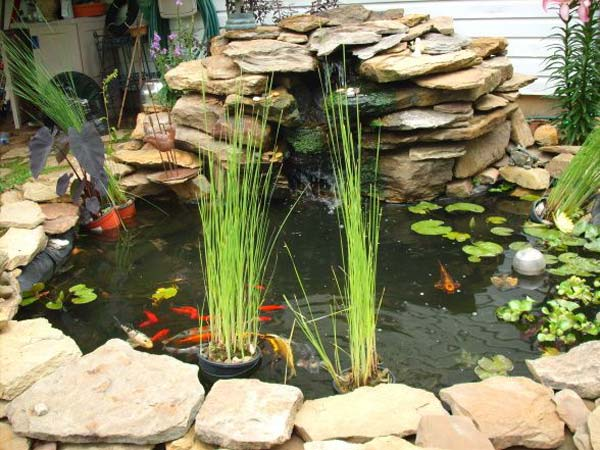 Wow 22 small garden or backyard aquarium ideas will blow for Aquarium fish for pond