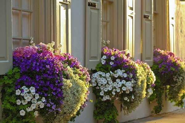 Spectacular-Balcony-Garden-Woohome-16