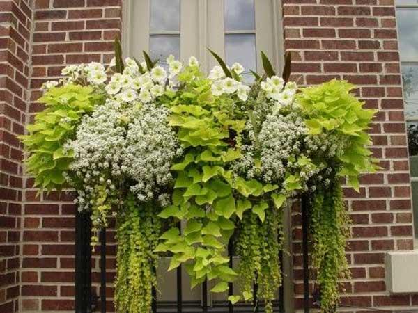 Spectacular-Balcony-Garden-Woohome-18