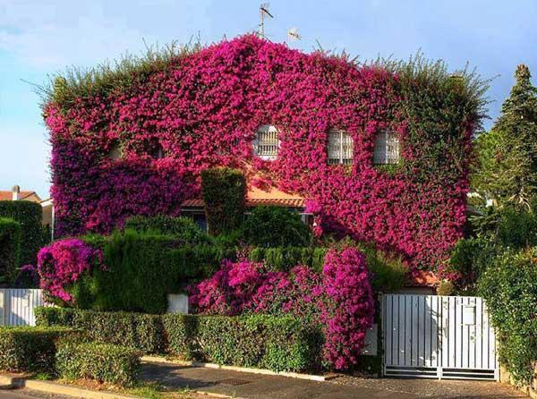 Spectacular-Balcony-Garden-Woohome-21