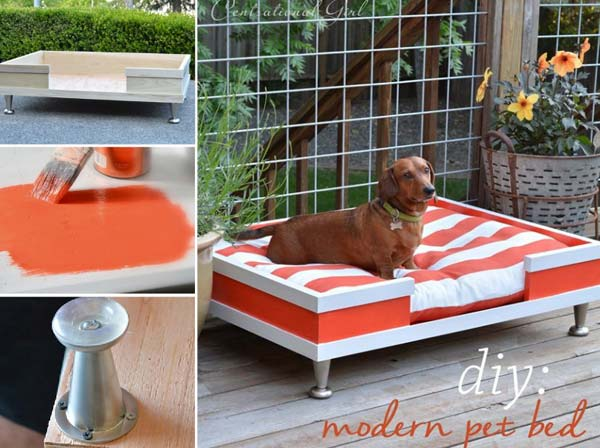 Projects-and-Tips-for-Pets-WooHome-10