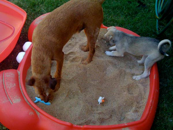 Projects-and-Tips-for-Pets-WooHome-15
