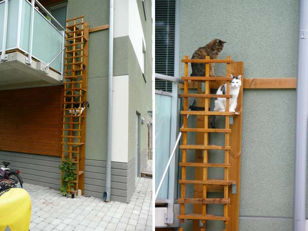 Projects-and-Tips-for-Pets-WooHome-16