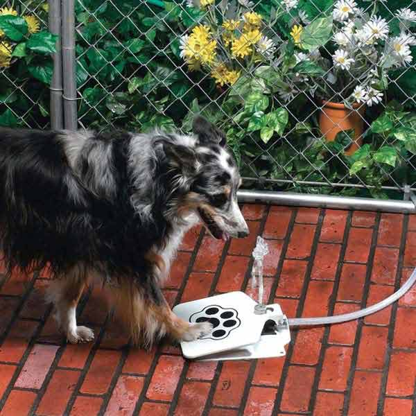Projects-and-Tips-for-Pets-WooHome-18