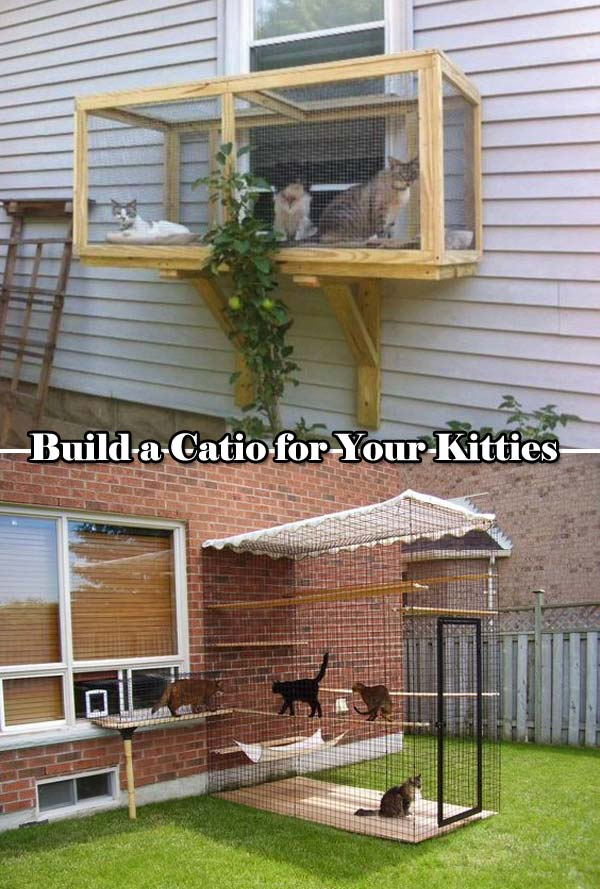 Projects-and-Tips-for-Pets-WooHome-21