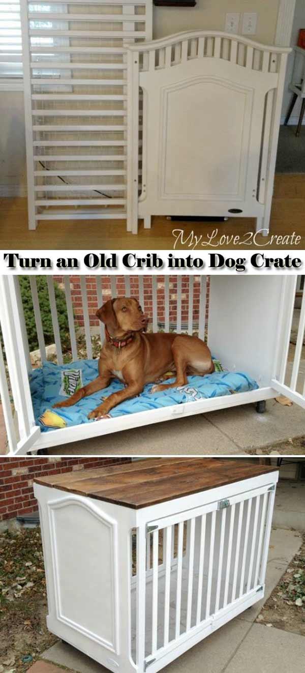 Projects-and-Tips-for-Pets-WooHome-22