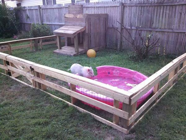 Projects-and-Tips-for-Pets-WooHome-23