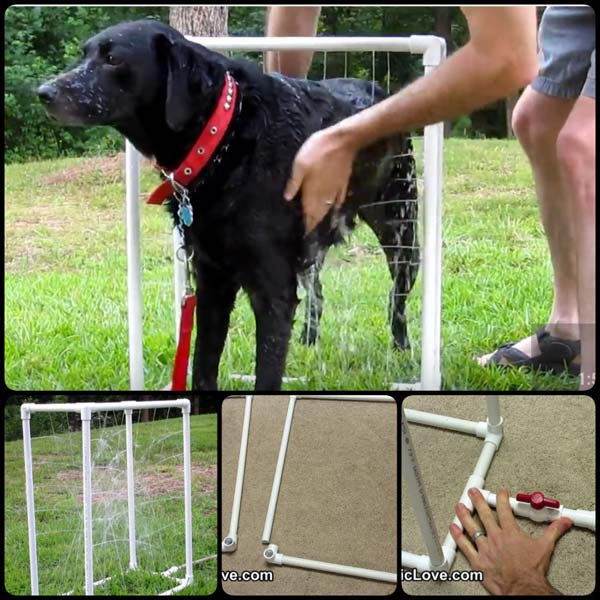 Projects-and-Tips-for-Pets-WooHome-24