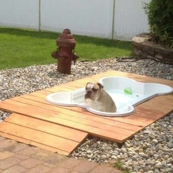 Projects-and-Tips-for-Pets-WooHome-3