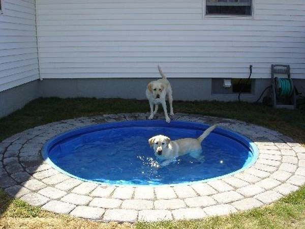 Projects-and-Tips-for-Pets-WooHome-6