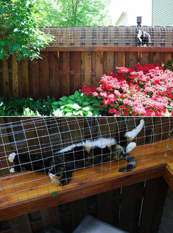 Projects-and-Tips-for-Pets-WooHome-7