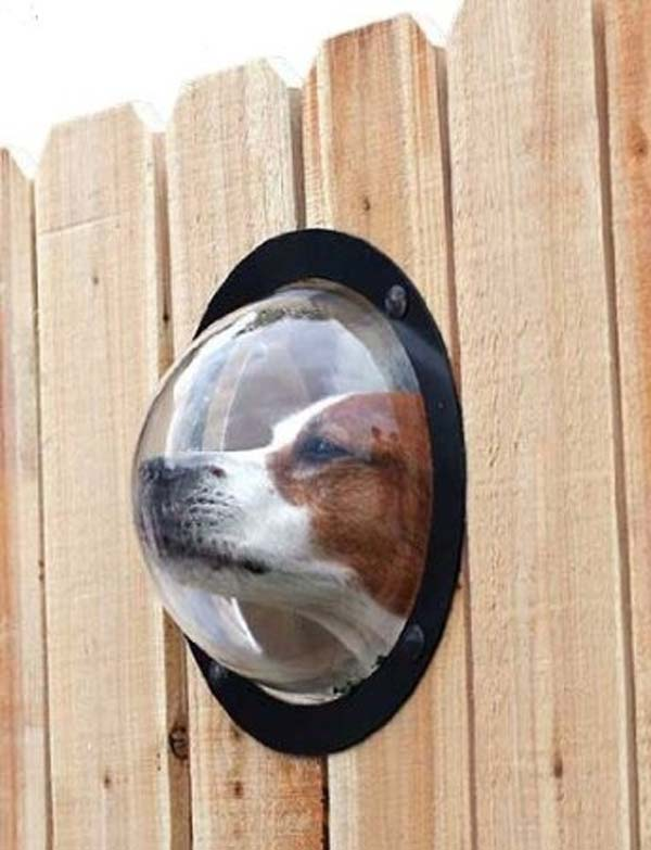 Projects-and-Tips-for-Pets-WooHome-9