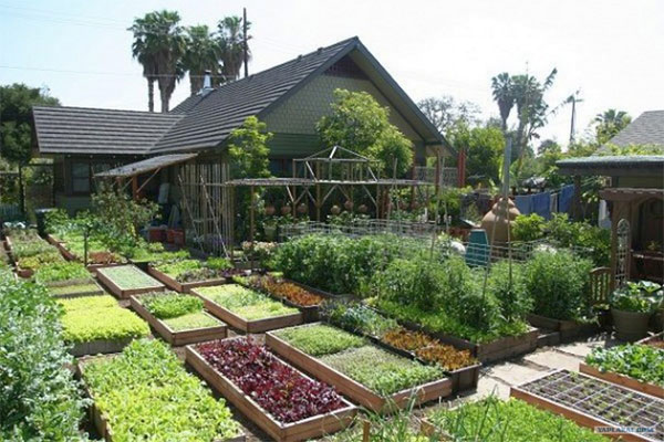 6000-Pounds-of-Food-On-1-10-Acre