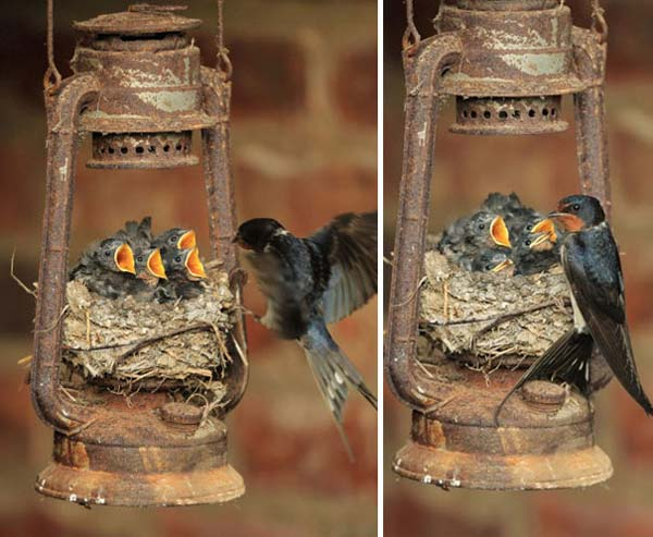 unusual-bird-nests-woohome-5
