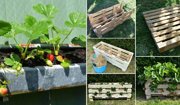 creative diy ideas for growing strawberries on small garden or yard - Diy Garden Ideas
