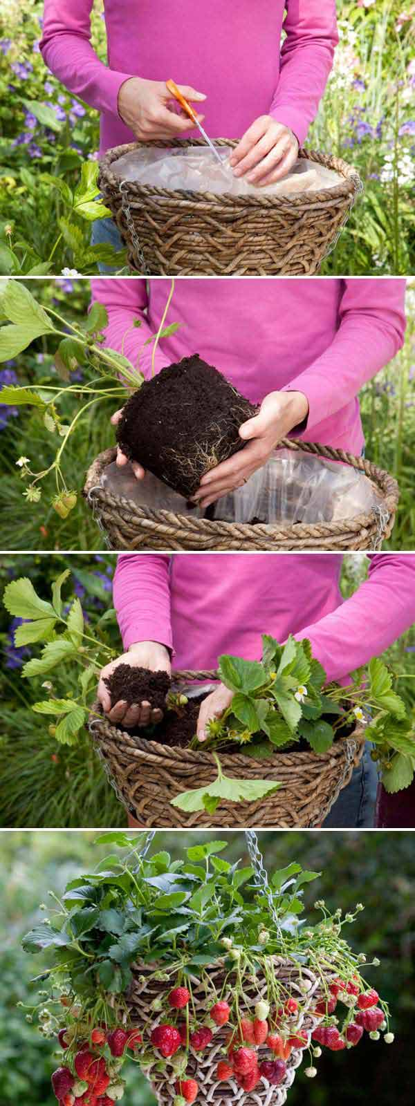 Growing_Strawberries_in_Baskets