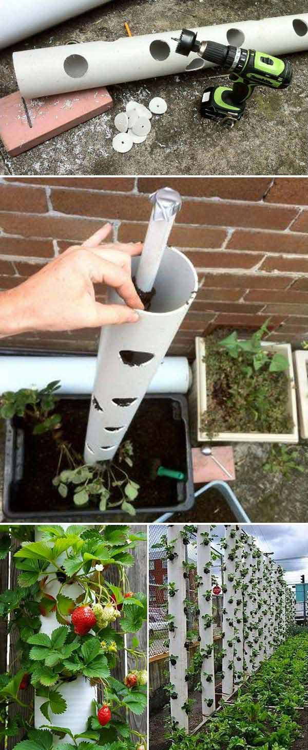 Make_a_Vertical_Strawberry_Tube_Planter