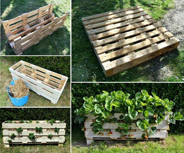 Strawberry Garden Ideas tin_cans_strawberry_planter Strawberry_pallet_planter