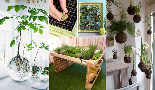 Top 24 Awesome Ideas to Display Your Indoor Mini Garden - Amazing ...