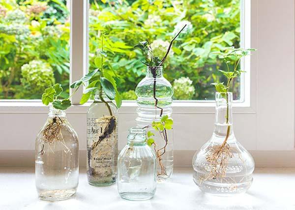 indoor-garden-projects-2_2