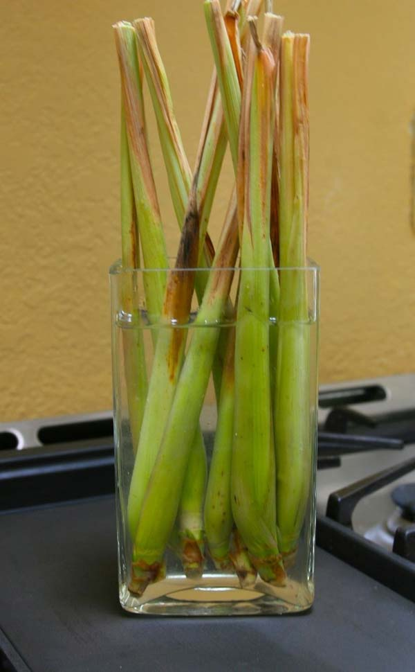 regrow-vegetable-kitchen-10