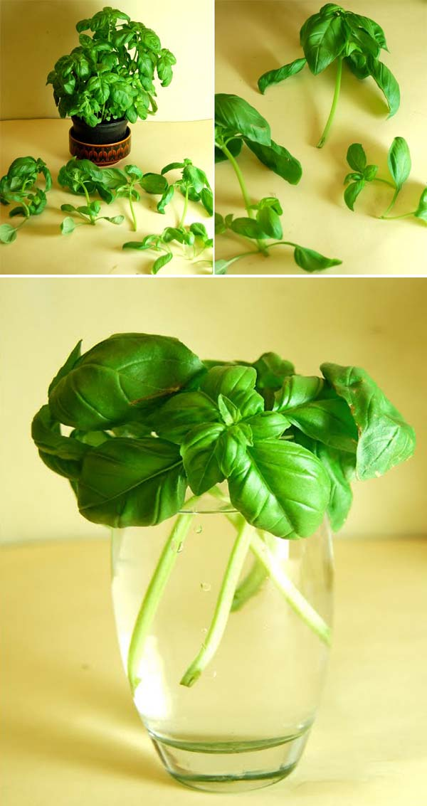 regrow-vegetable-kitchen-2