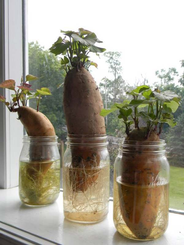 regrow-vegetable-kitchen-6