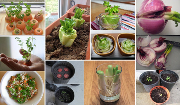 15 Vegetables Magically Regrow From Kitchen Scraps