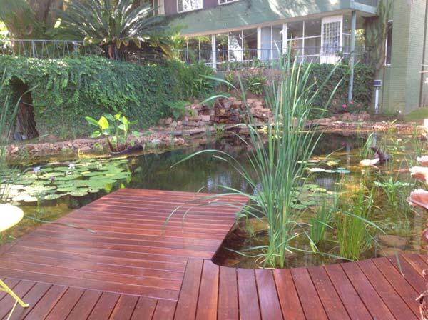 backyard-natural-swimming-pool-11