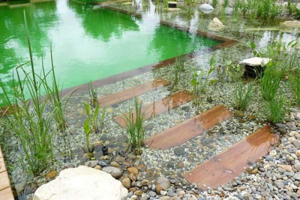 backyard-natural-swimming-pool-15