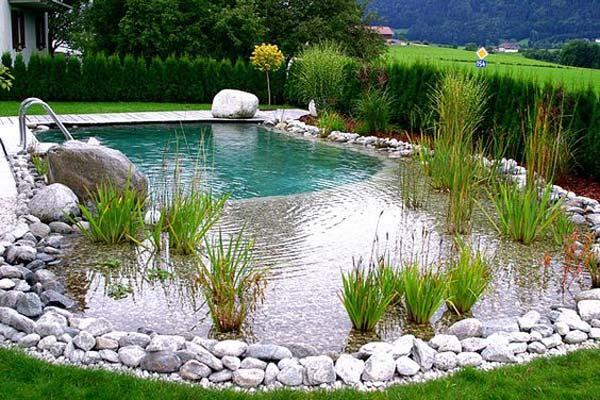 backyard-natural-swimming-pool-17
