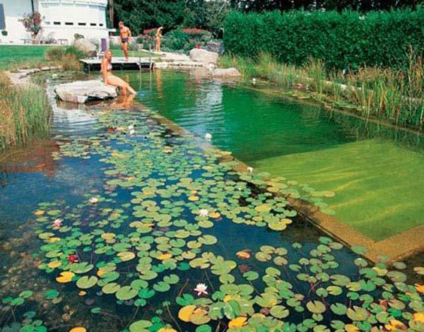 backyard-natural-swimming-pool-19