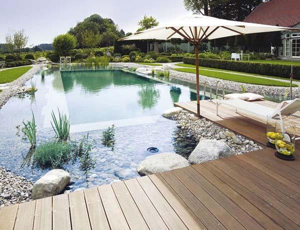 backyard-natural-swimming-pool-20