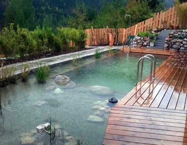 backyard-natural-swimming-pool-22